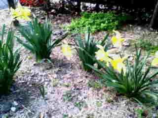 どんどん春が近づいてくる…