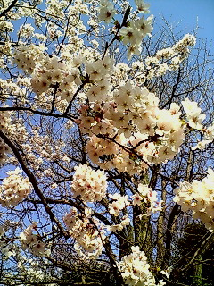 春なんだなぁ……♪